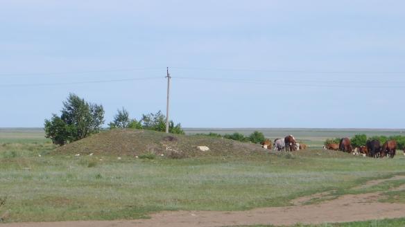 Landschaft_Kasachstan_Strommasten