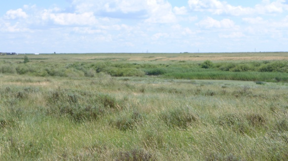 Steppe in Kasachstan